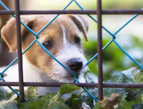 What You Need To Know When Building A Puppy Fence