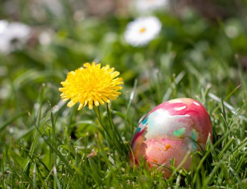 Protect Your Easter Egg Hunt With A Good Fence